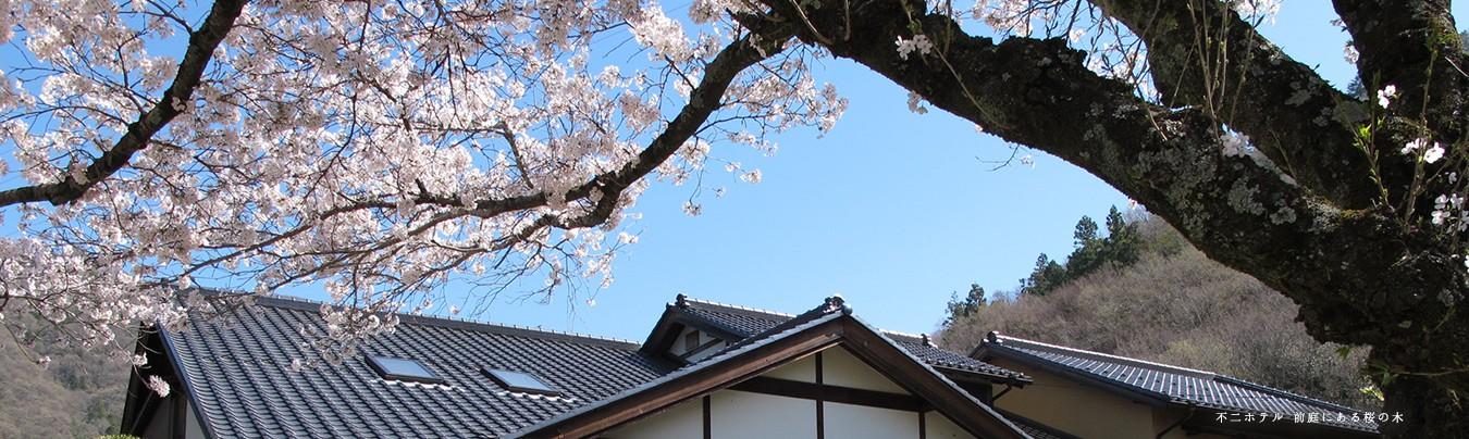 春は、不二ホテルの前庭で、お花見を楽しむことができます